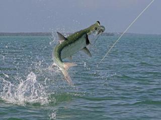 fly fishings grand slam tarpon liveoutdoors