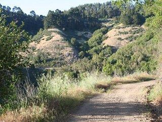 Trailheadin': Strawberry Canyon Fire Trail