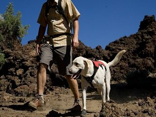 file_167023_0_hiking-with-dog