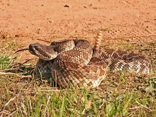 file_167253_0_snake