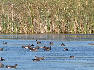 file_167341_0_ducks2