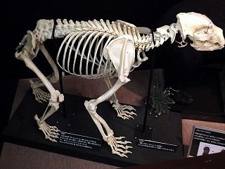 file_167471_0_bear_skeleton