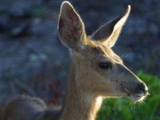 file_167543_0_deer