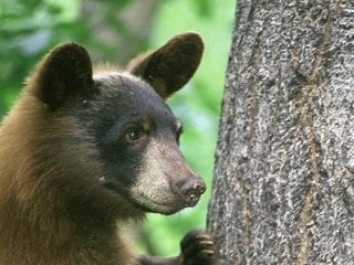 file_167579_0_youngbear