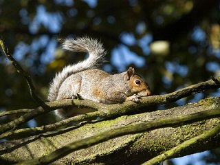 file_168137_0_squirrel