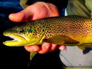 file_168219_0_trout