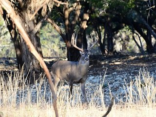 Five Best Trophy Deer States