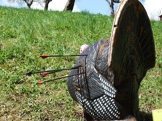 Genius Archer Aims at Pigeon, Shoots 9-Year Old Girl
