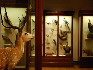 Tips for Finding a Top Taxidermist, Part One