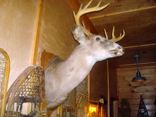 4 Ways to Impress your Taxidermist