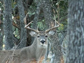 True Whitetail Trophies are Scarce