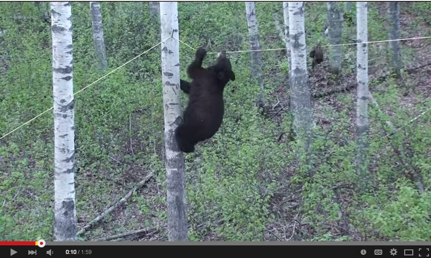 WATCH: 6 Must See Hilarious Bear Videos