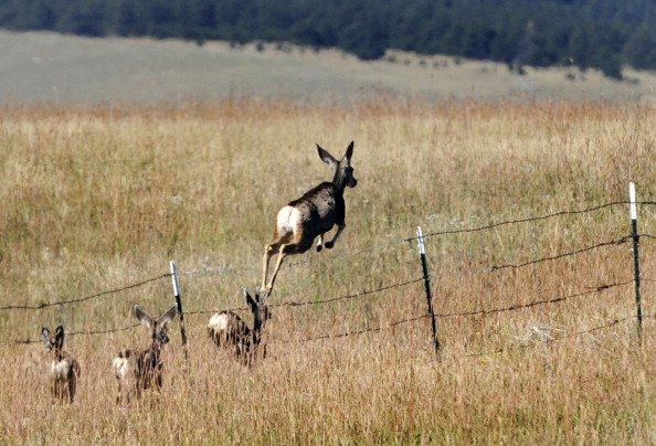 Wyoming Spring Migration Busy Time for Researchers