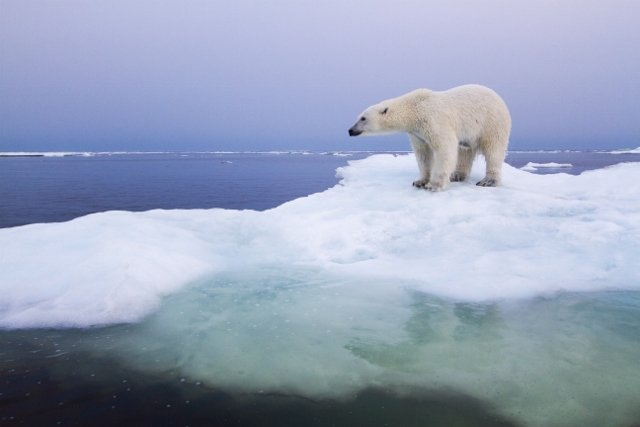 Polar Bear Mauls Camper in Norway