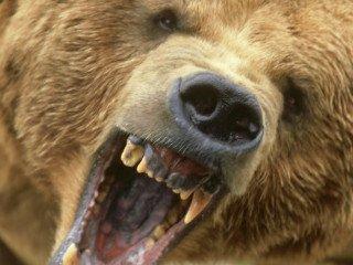 Top 7 Deadliest Animal Bites