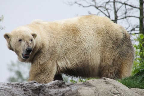 Man Saves Woman From Polar Bear Attack
