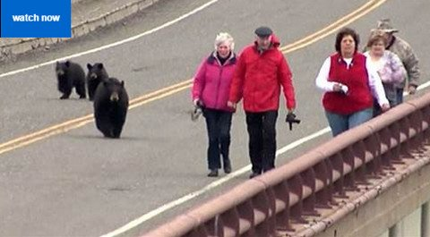 When Animals Attack at Yellowstone National Park