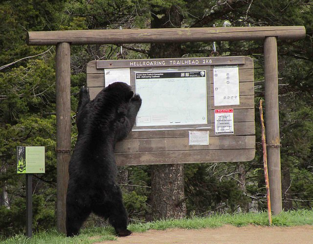 Critter Corner: Watch Bears Acting Like Humans