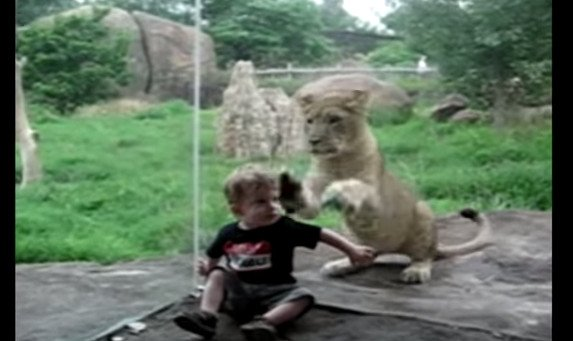 Terrifying Compilation of Animals Trying to Eat Children