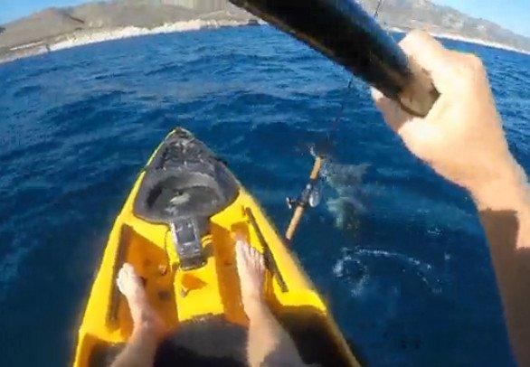kayak-sharkattack
