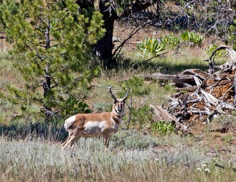 Oregon Grandmother Bags Antelope on 70th Birthday
