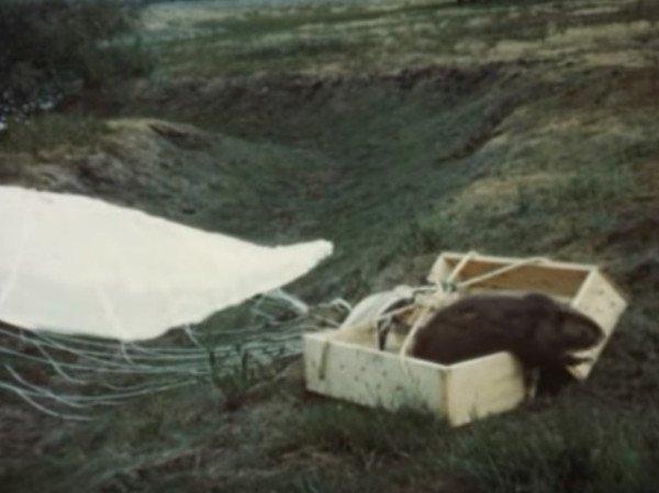 beaver-chute