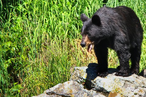 A Hair-Raising Bear Encounter for Idaho Hunter