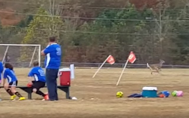 Soccer Playing Deer Gets Credit for Kid's Goal