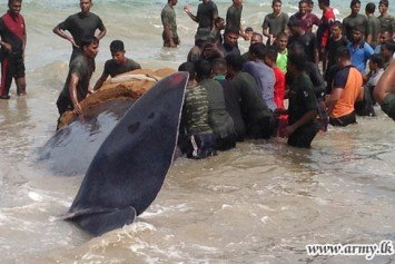 Sri Lanka Army Soldiers Rescue Entangled Whale