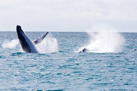 humpback-2