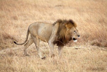 South African Trophy Hunters Condemn Half-Tame Hunts