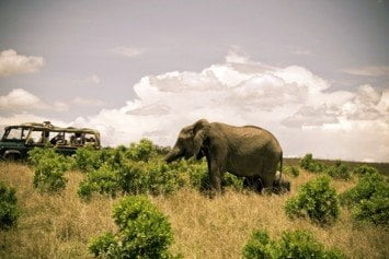 Visiting Botswana for an African Safari of a Lifetime