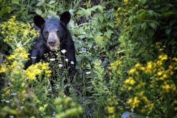 New Jersey Bear Hunt Draws Demonstrators