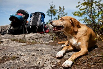 4 Things to Remember About Hiking With Your Dog