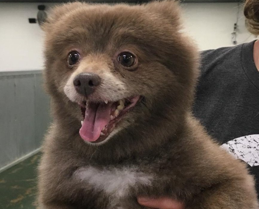 Is This A Dog Or Bear Cub Liveoutdoors
