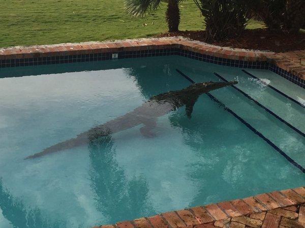 croc-pool