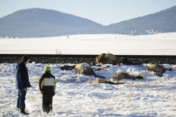 Train Wipes Out 23 Elk in Montana