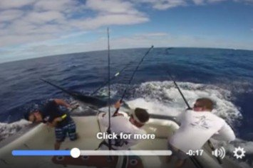 Swordfish Nearly Harpoons Fisherman