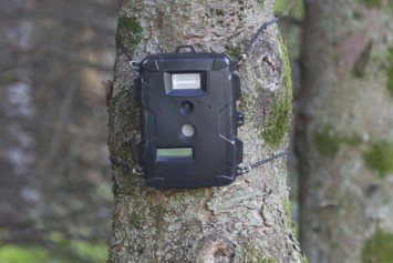 7 Ways to Get the Most Out of Your Trail Cam