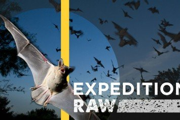 Watch 20 Million Bats Emerge From a Texas Cave