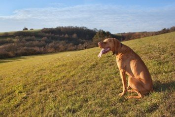 How to Keep Your Hunting Dog in Shape Over the Off-Season