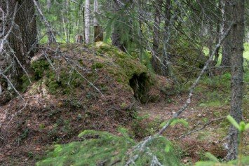 How to Spot a Bear Den Even in Thick Forest