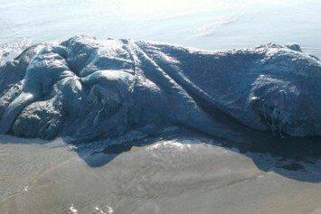 Bizarre Sea Creature Found On Mexico Beach Explained