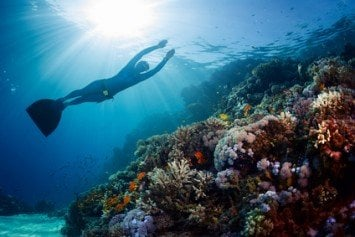 Why Freediving Should Be Your Next Endeavor