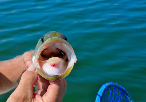 All Time Great Fly Fishing Tips For Largemouth Bass Liveoutdoors