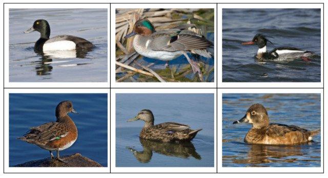 duck-quiz