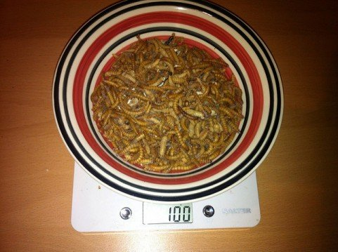 100-grams of mealworms