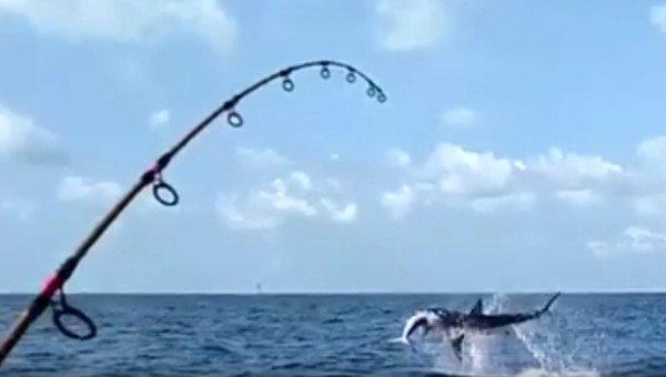 shark-takes-fish