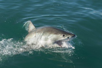 SoCal Shark Attack Prompts Memorial Day Beach Closure