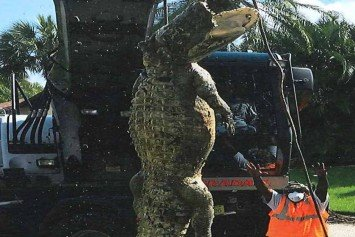 Dead Florida Alligator Pulled From Sewer